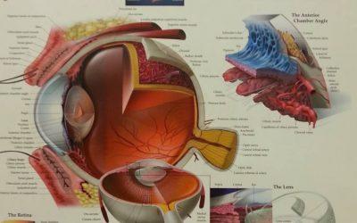 Аномалии в рефракцията на окото – Късогледство, далекогледство, пресбиопия, астигматизъм.